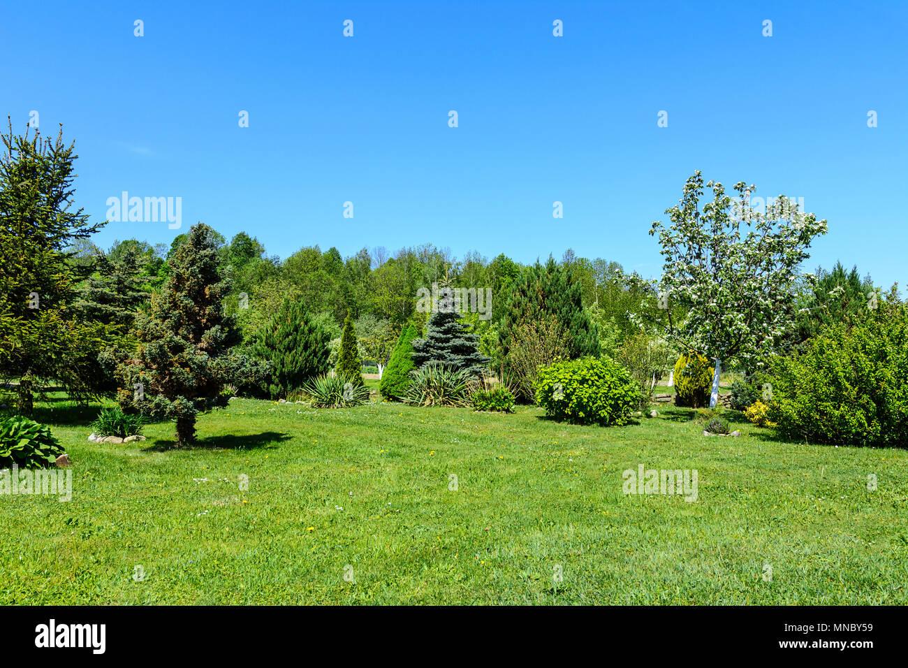 Frühling Garten Landschaft Grüner Rasen Nadelbäume Obstbäume