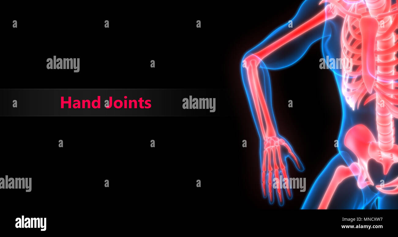 Menschliches Skelett System Knochen Gelenkschmerzen Anatomie ...