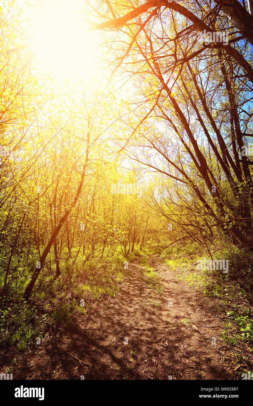 Weg im Wald Stockbild