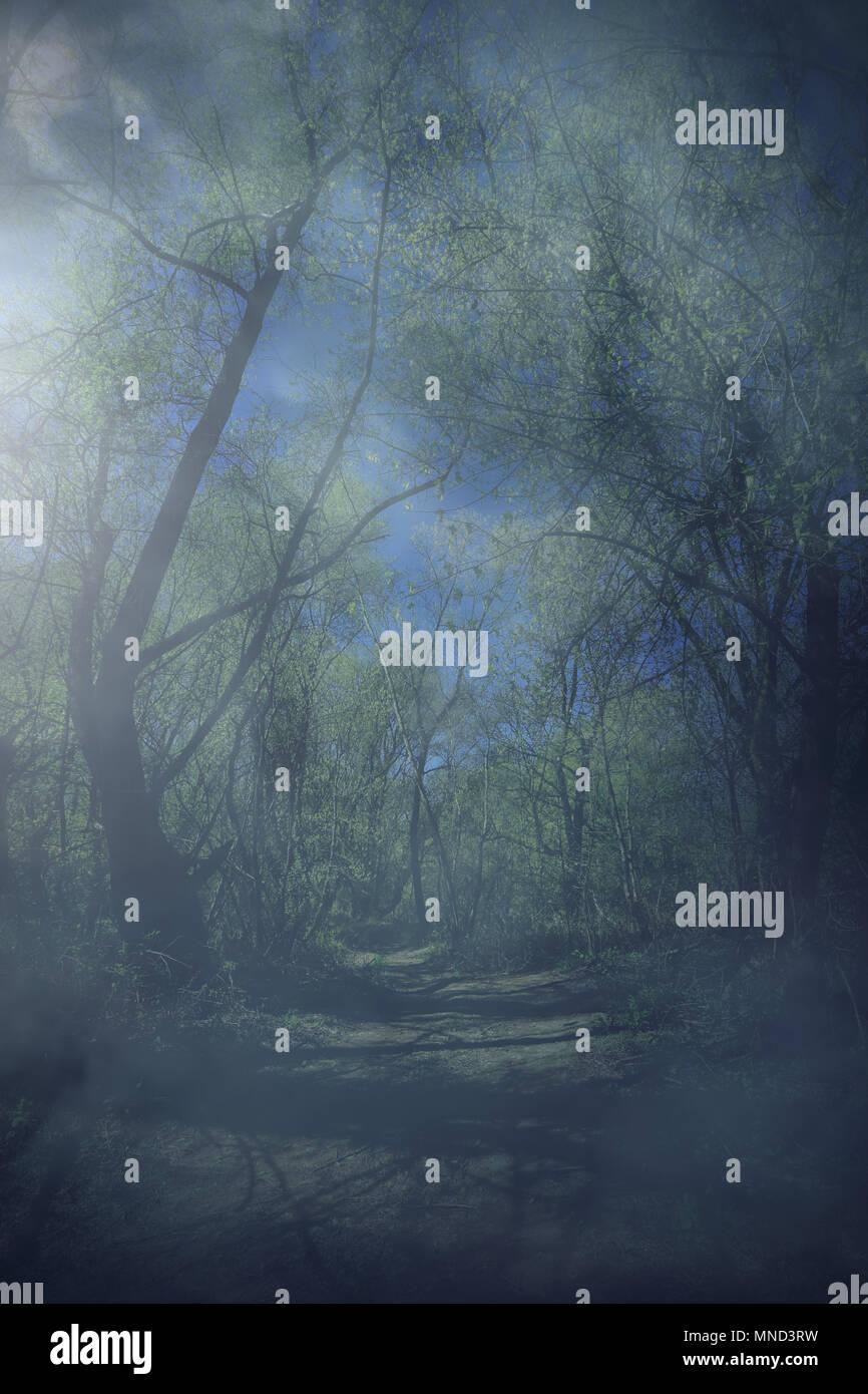 Nebligen Wald bei Nacht Stockbild