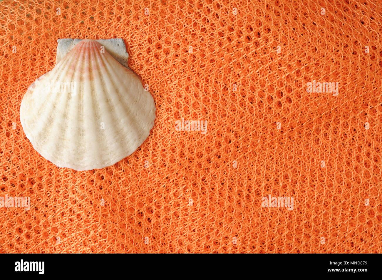 Sommer minimalistischen Hintergrund, seashell auf orange net von oben, mit Raum für Text Stockfoto