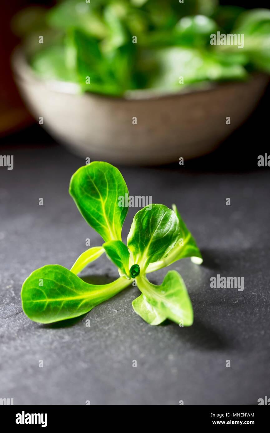 Feldsalat in und vor einer Schüssel Stockbild