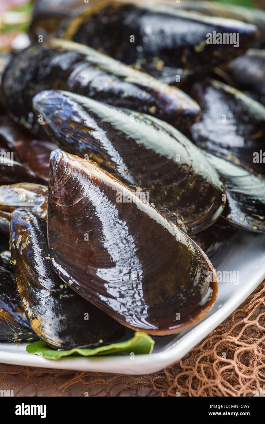 Frisch und lebendig Muscheln für gereinigt Kochen und fertig gedämpft werden Stockbild