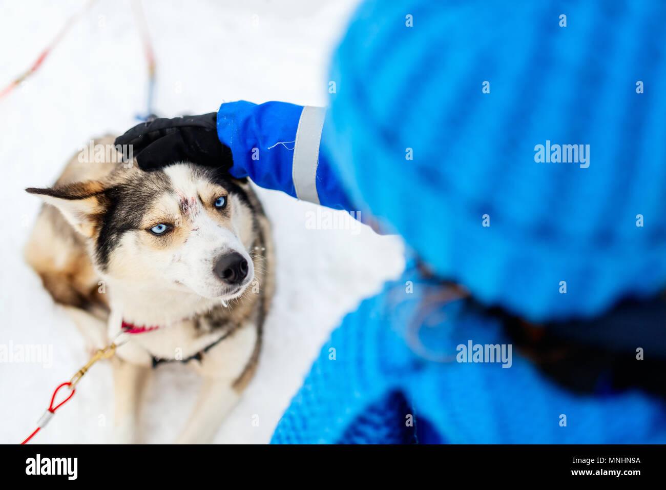 Adorable kleine Mädchen mit einem Kuscheln mit Husky Schlittenhund in Lappland Finnland Stockbild