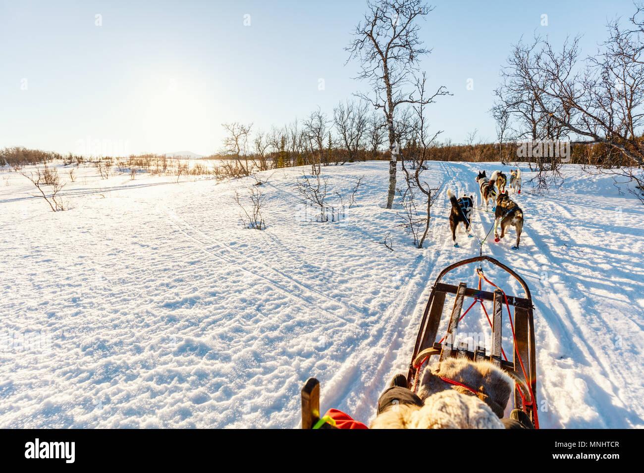Husky Hunde ziehen Schlitten mit kleinen Mädchen an sonnigen Wintertag im nördlichen Norwegen Stockbild
