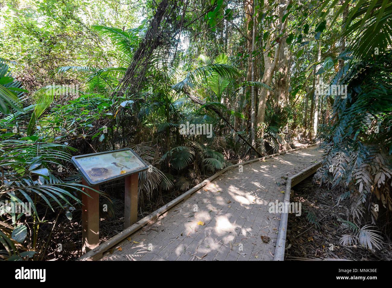 Uppigen Tropischen Regenwald Entlang Der Promenade Am Cattana