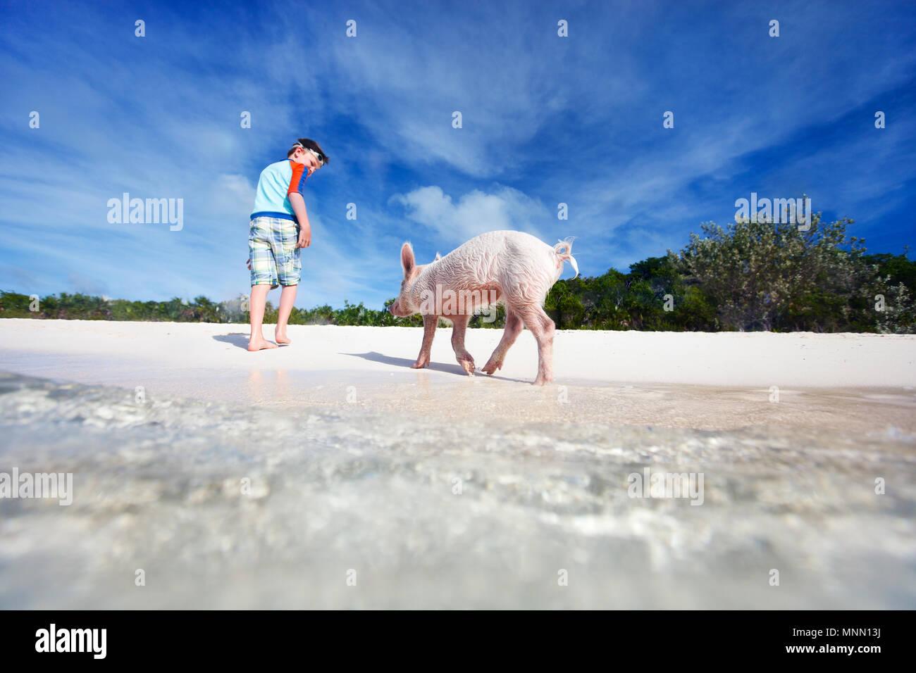 Junge mit einem Schwein von Exuma, Bahamas Stockbild