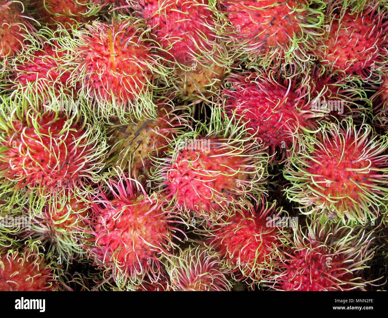Rambutan, Nephelium Lappaceum, die litschi wie Obst mit langen Haken Stacheln, Costa Rica, Mittelamerika Stockbild