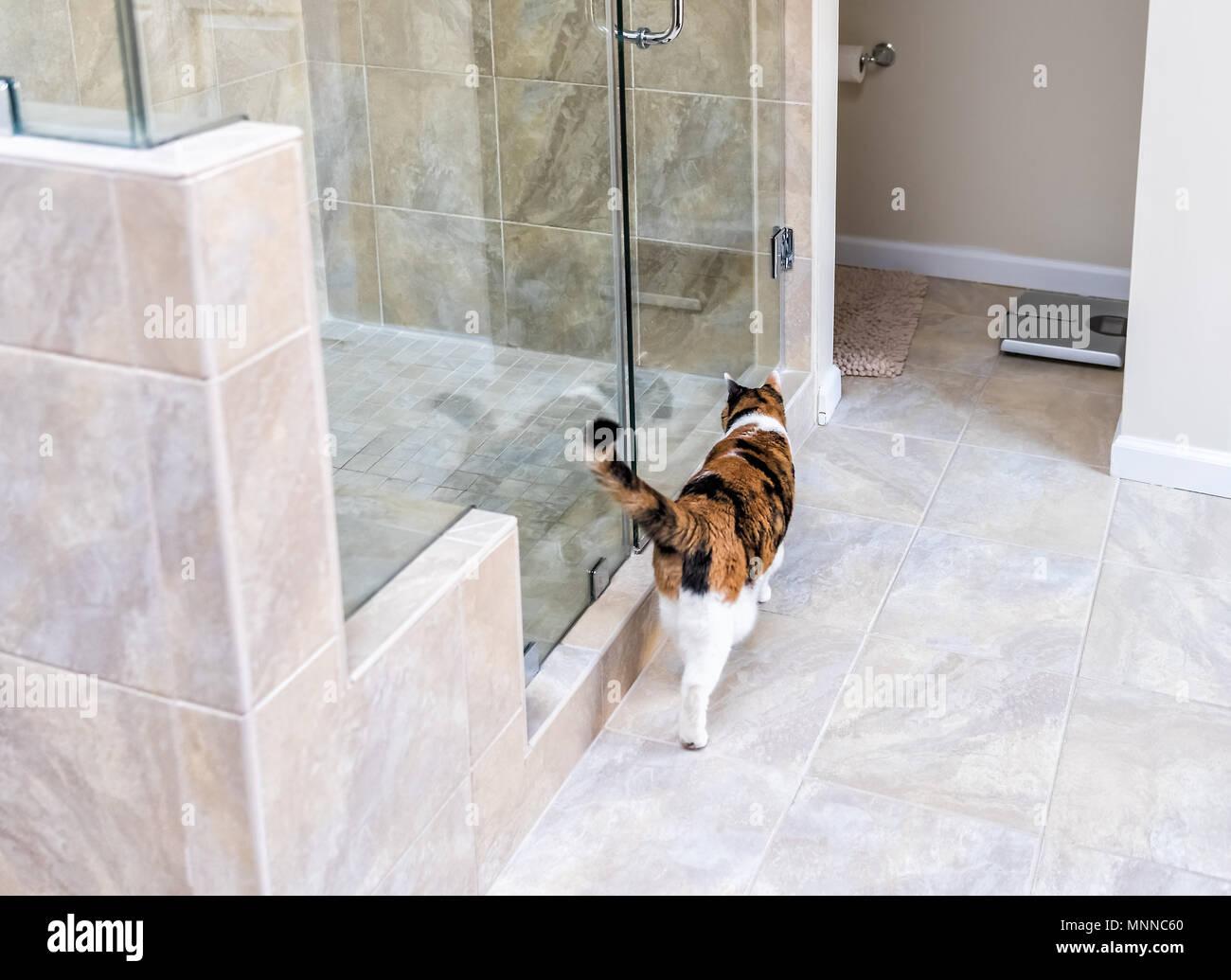 Moderner Luxus Badezimmer mit Fliesen eine orange Calico Cat ...