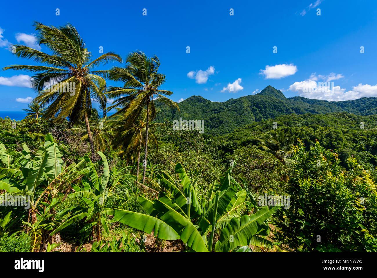 Tropischer Regenwald auf der karibischen Insel St. Lucia. Es ist ein Paradies mit einem weißen Sandstrand und Meer turquoiuse. Stockbild