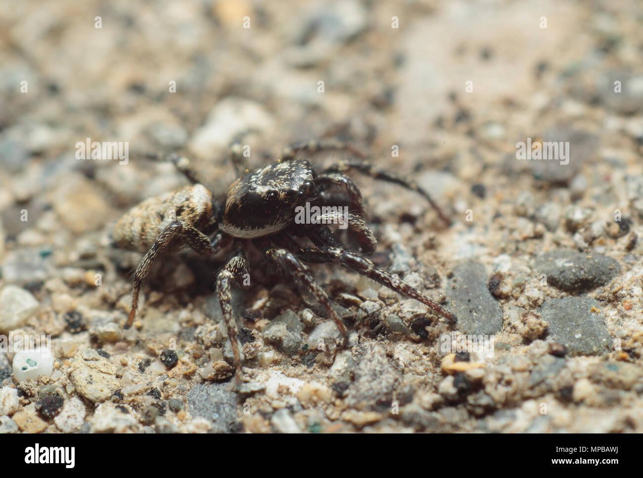 Spider Anatomy Stockfotos Spider Anatomy Bilder Alamy