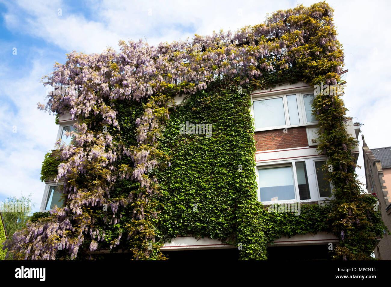 Favorit Deutschland, Köln, mit Pflanzen bedeckt Haus in der Straße grosse LJ45