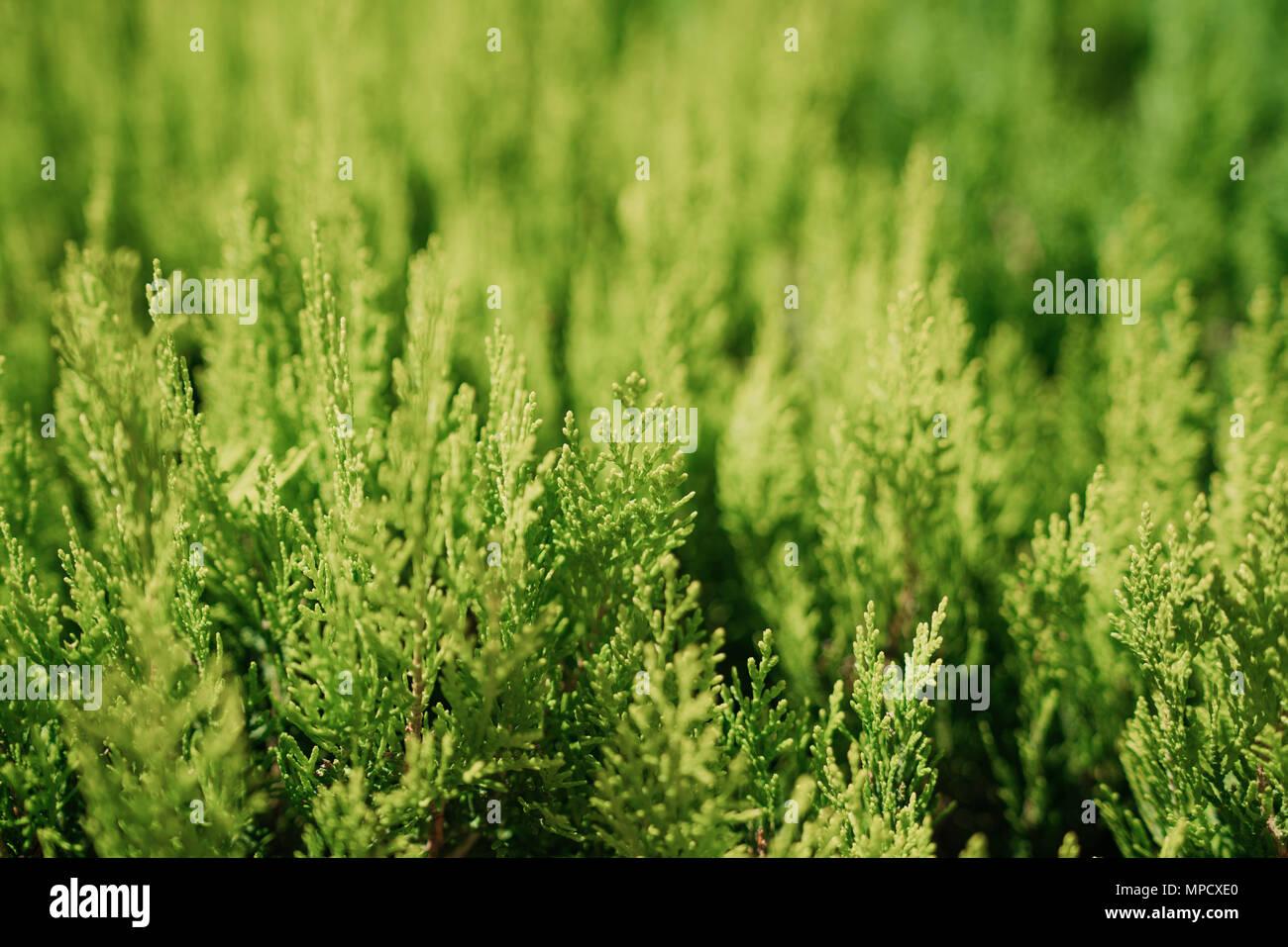 Desktop hintergrundbilder fruhling