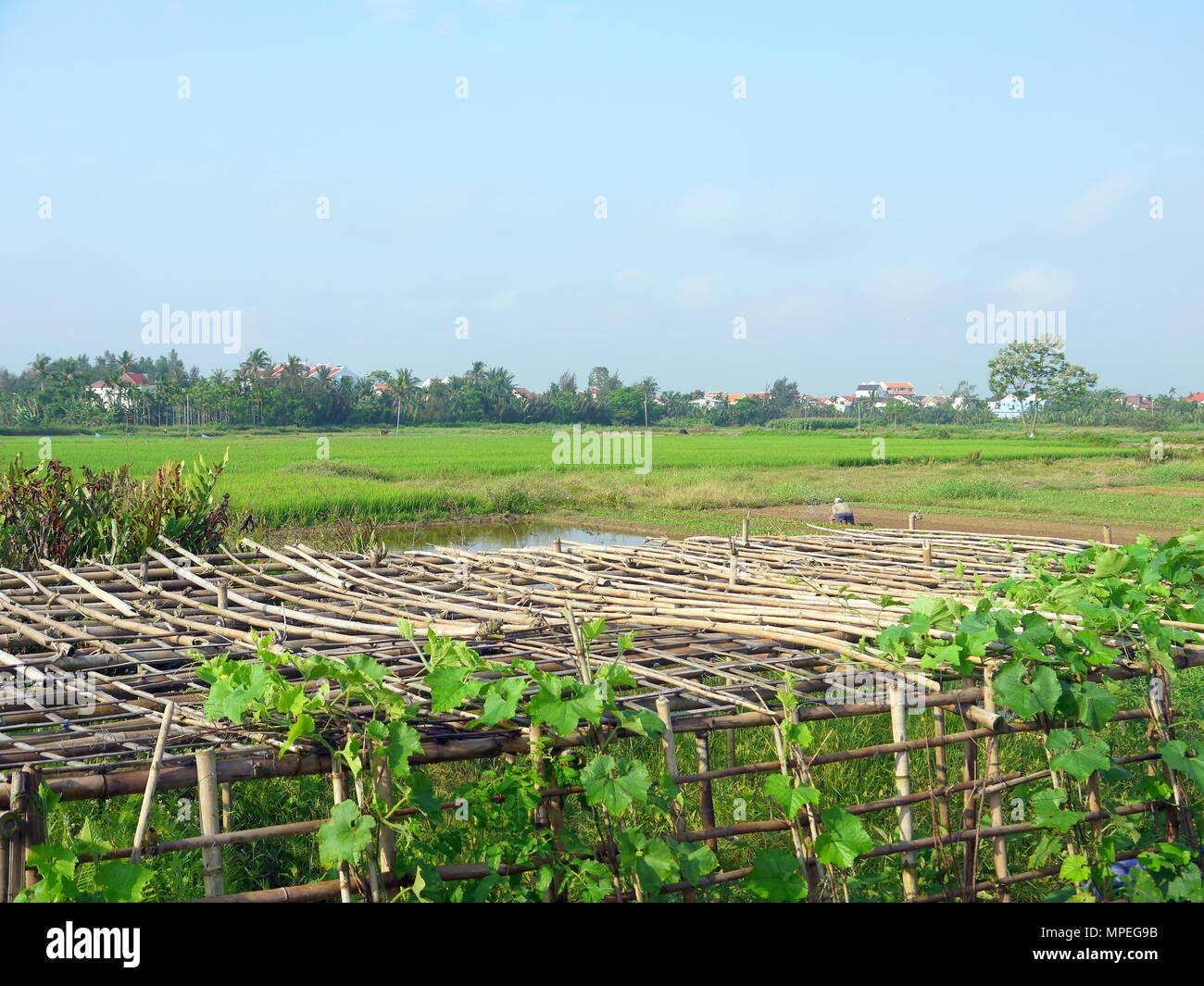 Schone Landschaft Mit Melone Reben Auf Bambus Pergola Hauser Und