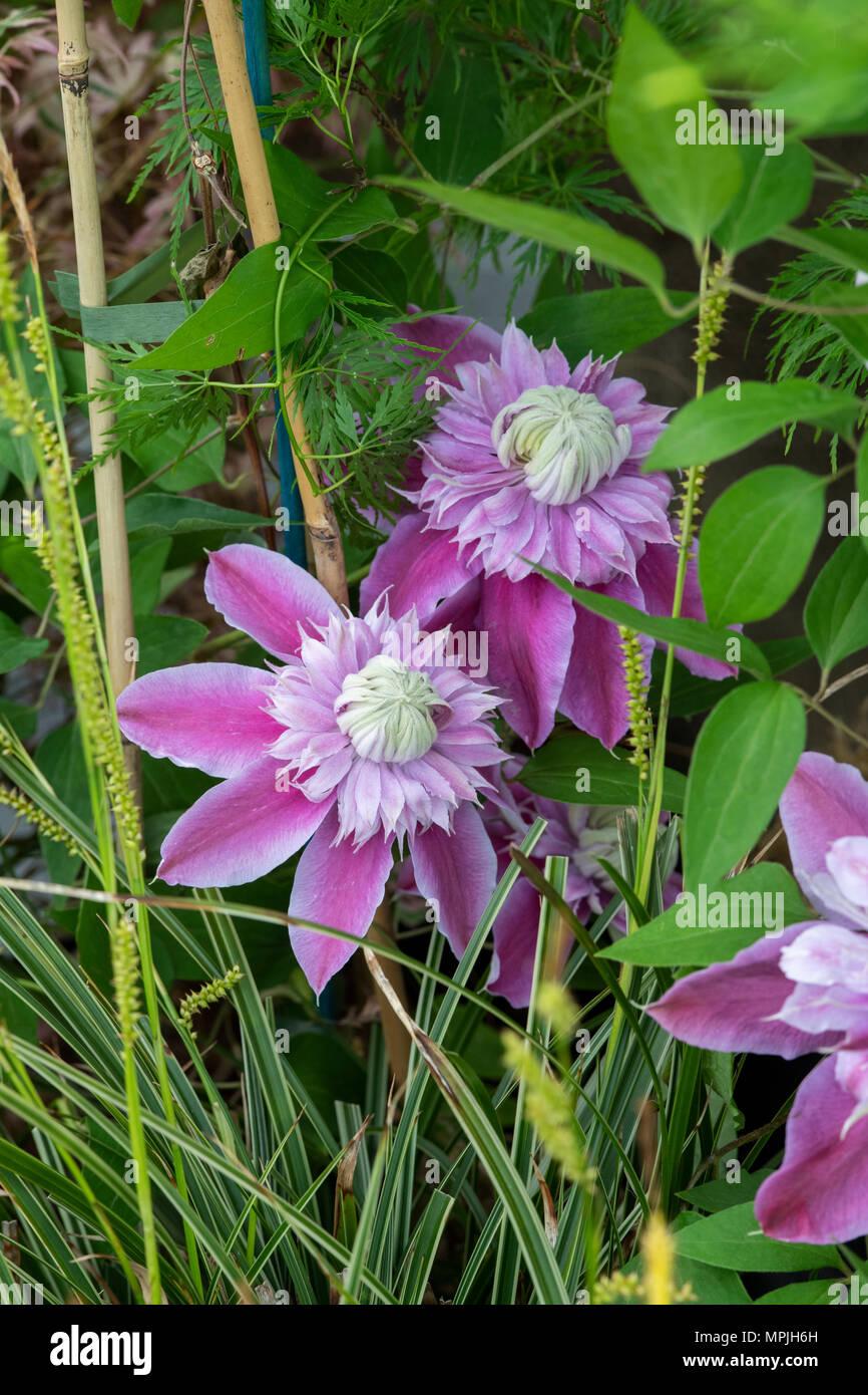 Blumen für frühe Dating Mccrae und amanda Dating vor großem Bruder