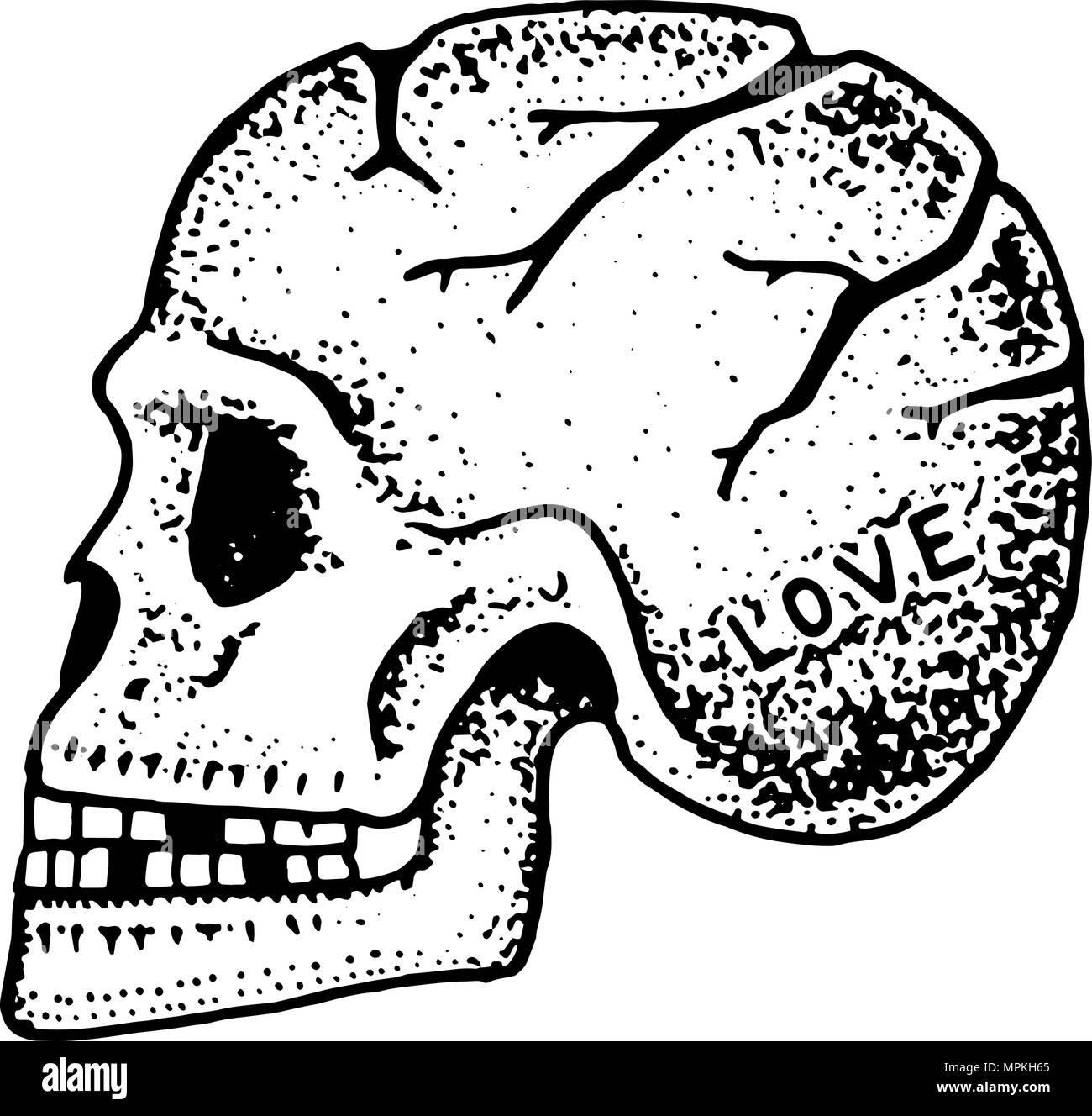 Anatomische menschlicher Schädel. Skelett des Kopfes. Mode Tattoo ...