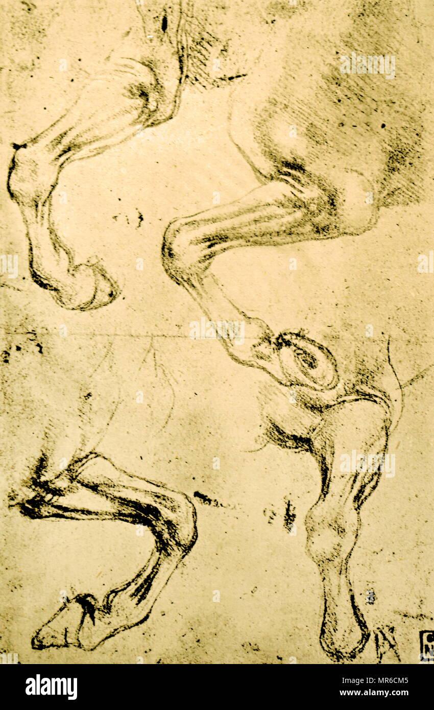 Vier Studien der Pferde Beine; c 1500. Aus der Sammlung des Museums der Bildenden Künste, Budapest. Von Leonardo da Vinci (1452-1519), ein italienischer Renaissance Universalgelehrten. Da Vinci war Experte in der Erfindung, Malerei, Architektur, Wissenschaft und Technik als einer der größten Maler aller Zeiten er die Renaissance humanistisches Ideal verkörpert. Stockbild