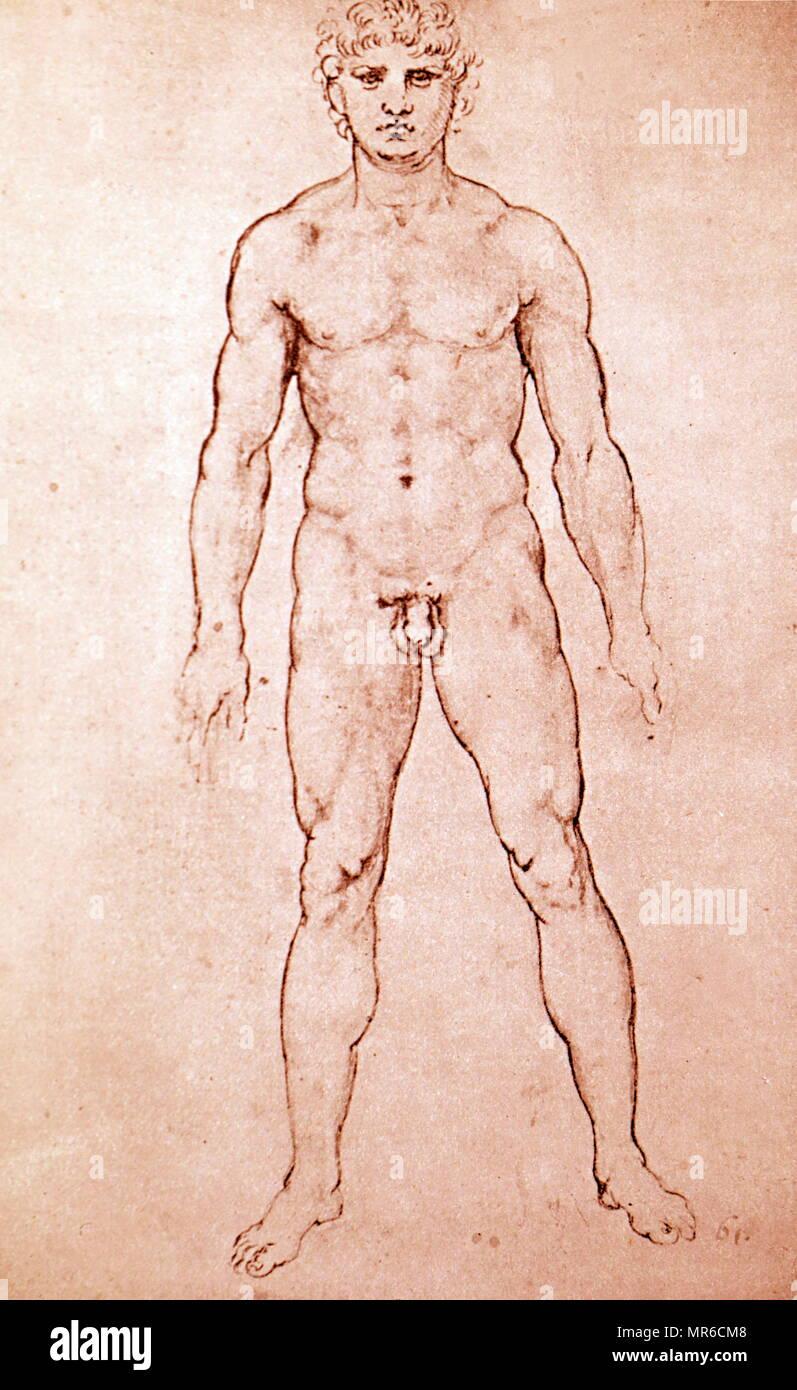 Die Proportionen eines Menschen, 1506, Feder und Tinte. Von Leonardo ...