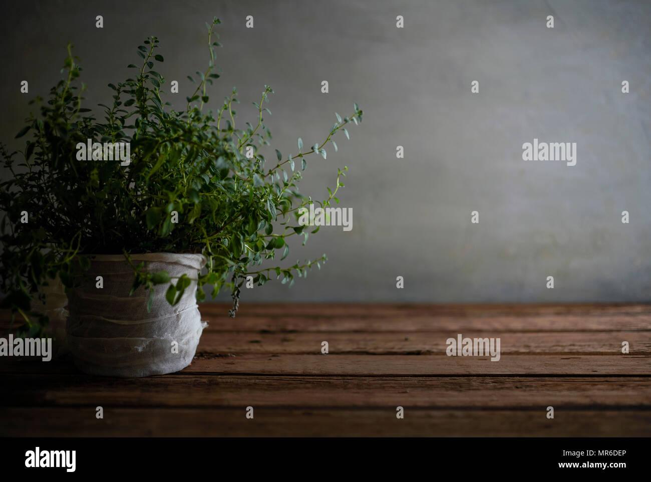 Eine schöne, unordentlichen Oregano Anlage auf einem abgenutzten Holztisch. Stockbild