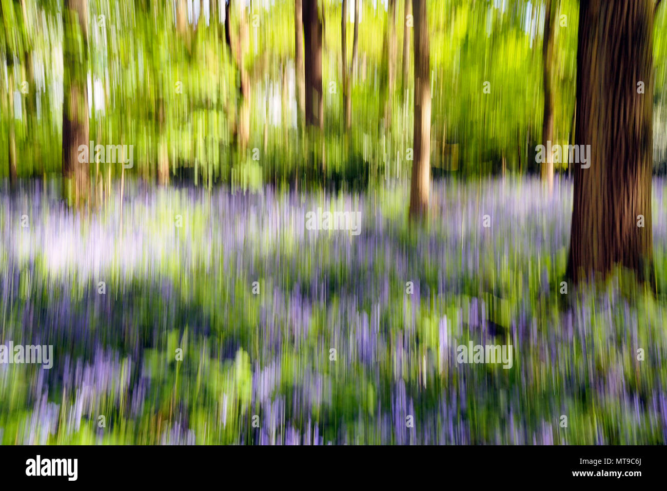 Bluebell Woods Abstract Stockbild