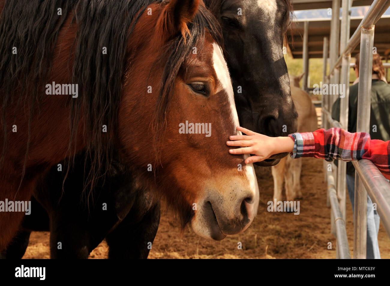Ein Junge wählt ein Pferd als Weihnachtsgeschenk von seiner Tante an ...
