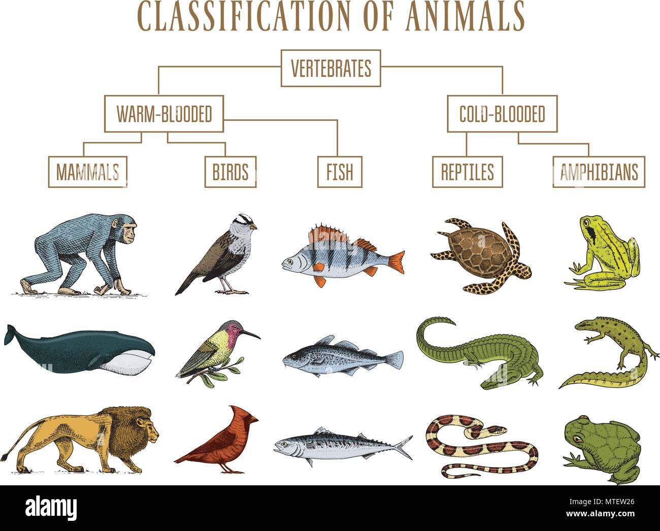 Hand Drawn Hippo Animal Vector Stockfotos & Hand Drawn Hippo Animal ...