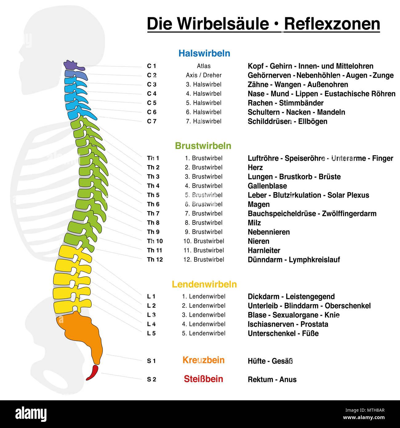 Tolle Interne Körperteile Namen Bilder - Physiologie Von ...