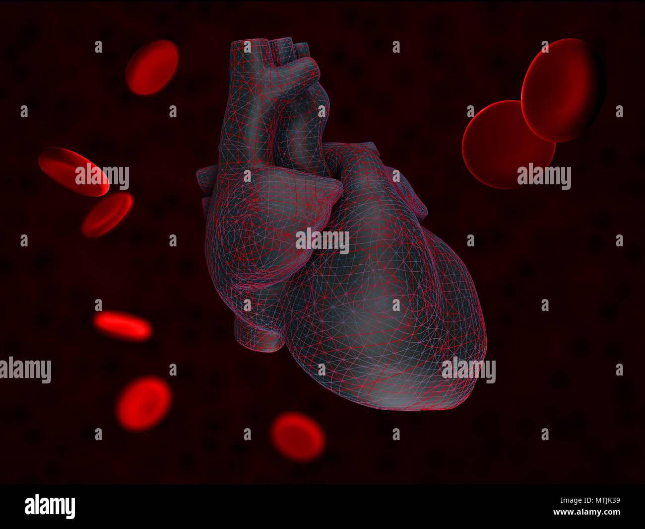 3D-Darstellung der Anatomie des menschlichen Herzens mit Blut Zellen ...