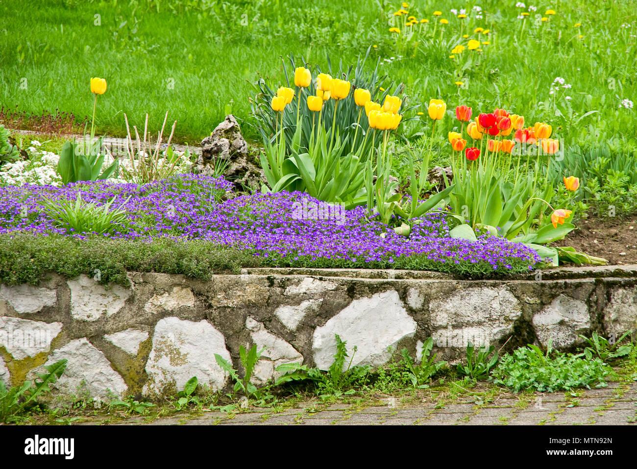 Kleinen Steingarten im Hof mit bunten Frühlingsblumen. Stockbild