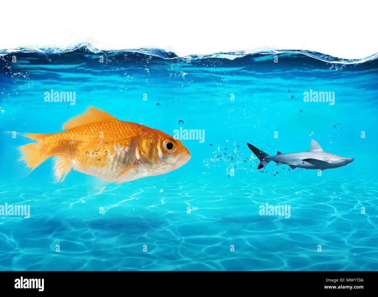 Große Goldfische Angriffen eine Angst Hai im Meer. Konzept der Tapferkeit Stockbild