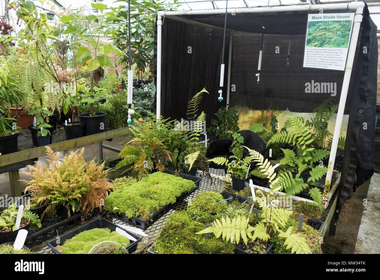 Eine MOSS-Schatten Haus, für wachsende empfindlichen Arten von Moos und Moosen, die an der biologischen Wissenschaften Gewächshaus an der Universität von Minnesota, USA. Stockbild