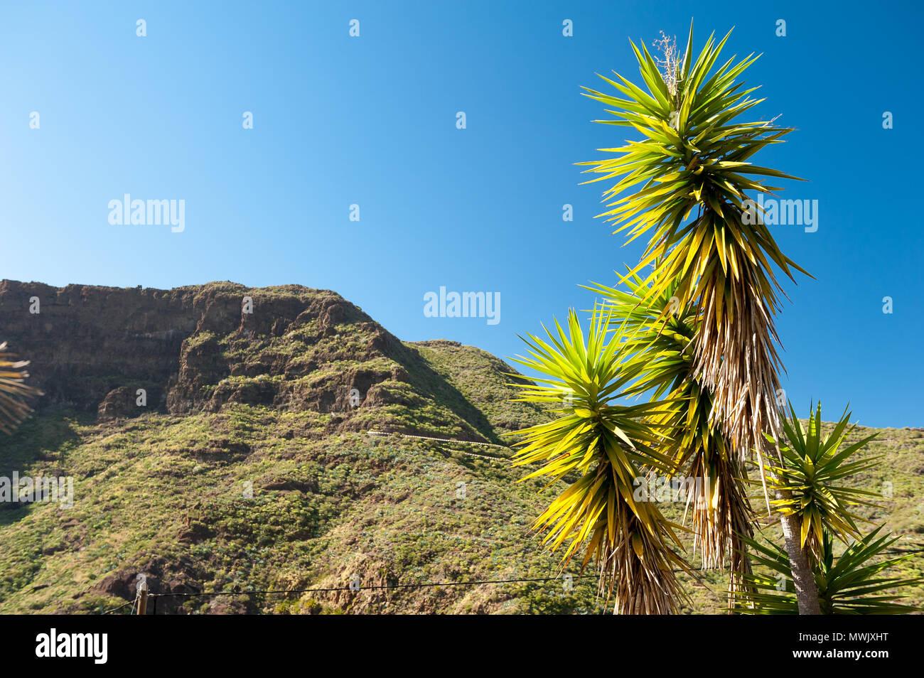 Masca, Teneriffa, Kanarische Inseln, Spanien Stockbild