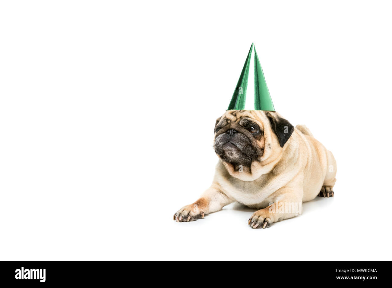 Studio Geschossen Von Mops Hund In Partei Hut Isoliert Auf Weissem Stockbild
