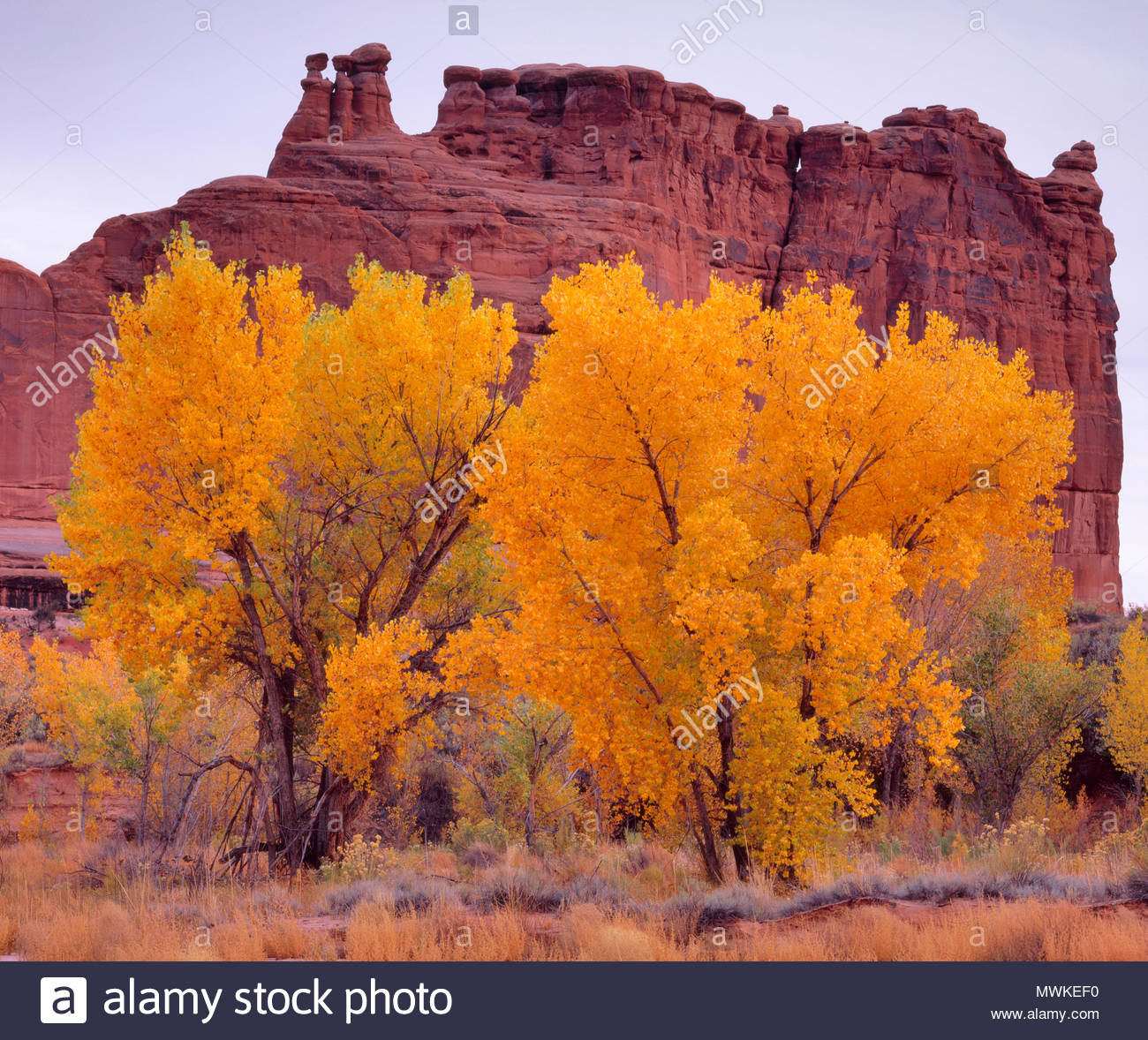 Herbst Cottonwood im Courthouse Wash, Arches National Park, Utah Stockbild