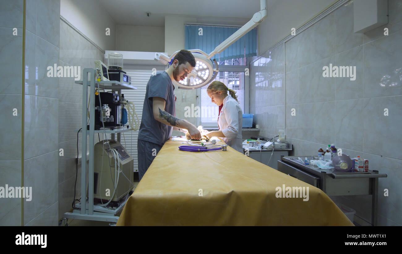 Tierärzte bereiten den Hund für Chirurgie. Operationssaal mit medizinischen Geräten in einer Tierklinik. Tabelle für chirurgische Eingriffe im Krankenhaus. Stockbild