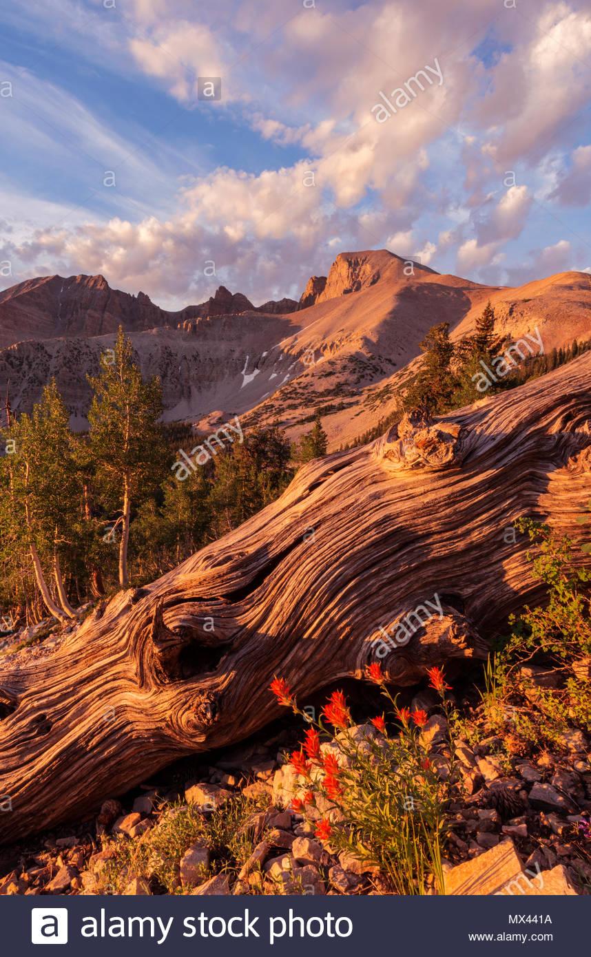 Wolkenformationen, Wheeler Peak und Pinsel, Great Basin National Park, Nevada Stockbild