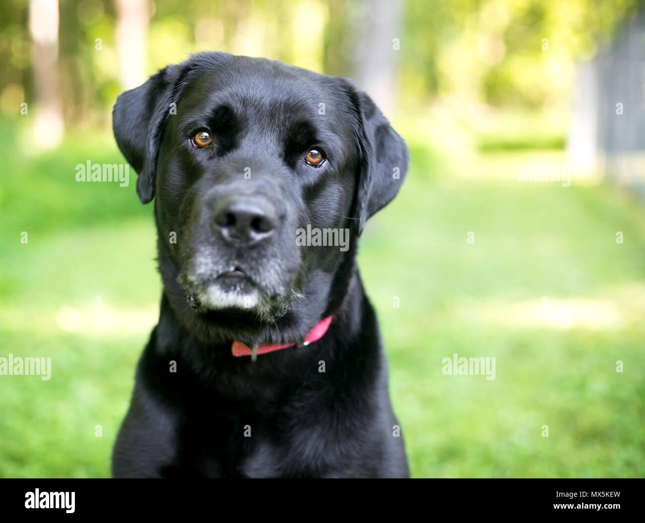 Glanzendes Schwarzes Fell Stockfotos Und Bilder Kaufen Alamy