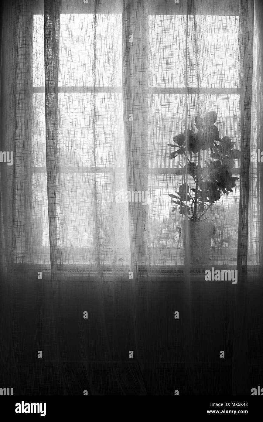 0a6a322daf21c6 Pflanze Im Topf Hinter Leinen Vorhang In Fenster Schwarz Und Weiß