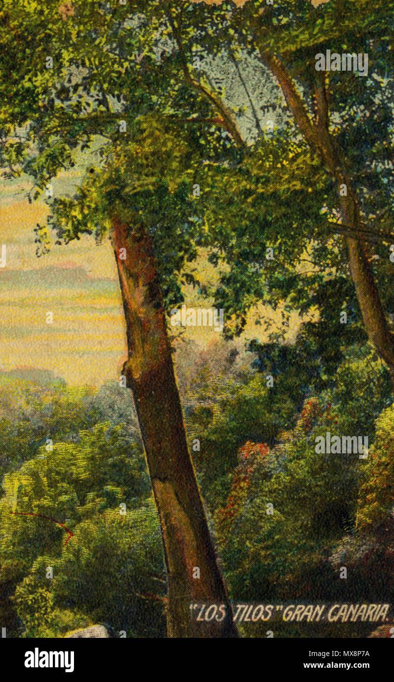 . Fragmento de una postal Antigua coloreada en la que se aprecian Los Tilos de Moya (Gran Canaria). 1905. Anonym 377 Los Tilos Stockbild