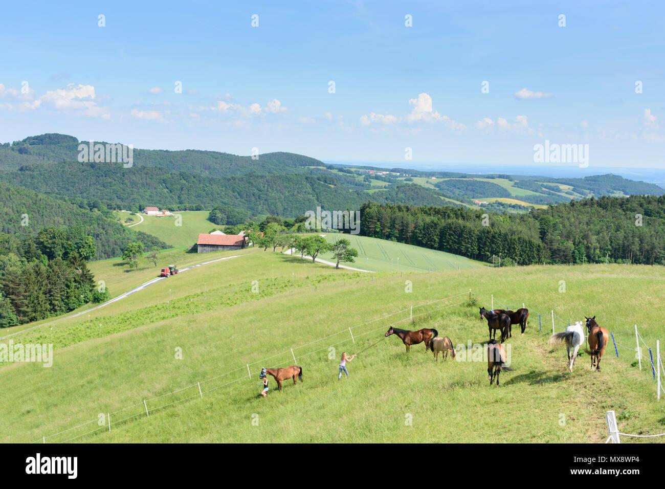 Hochwolkersdorf Pferde In Der Valley Stream Grasgrabenbach Mädchen