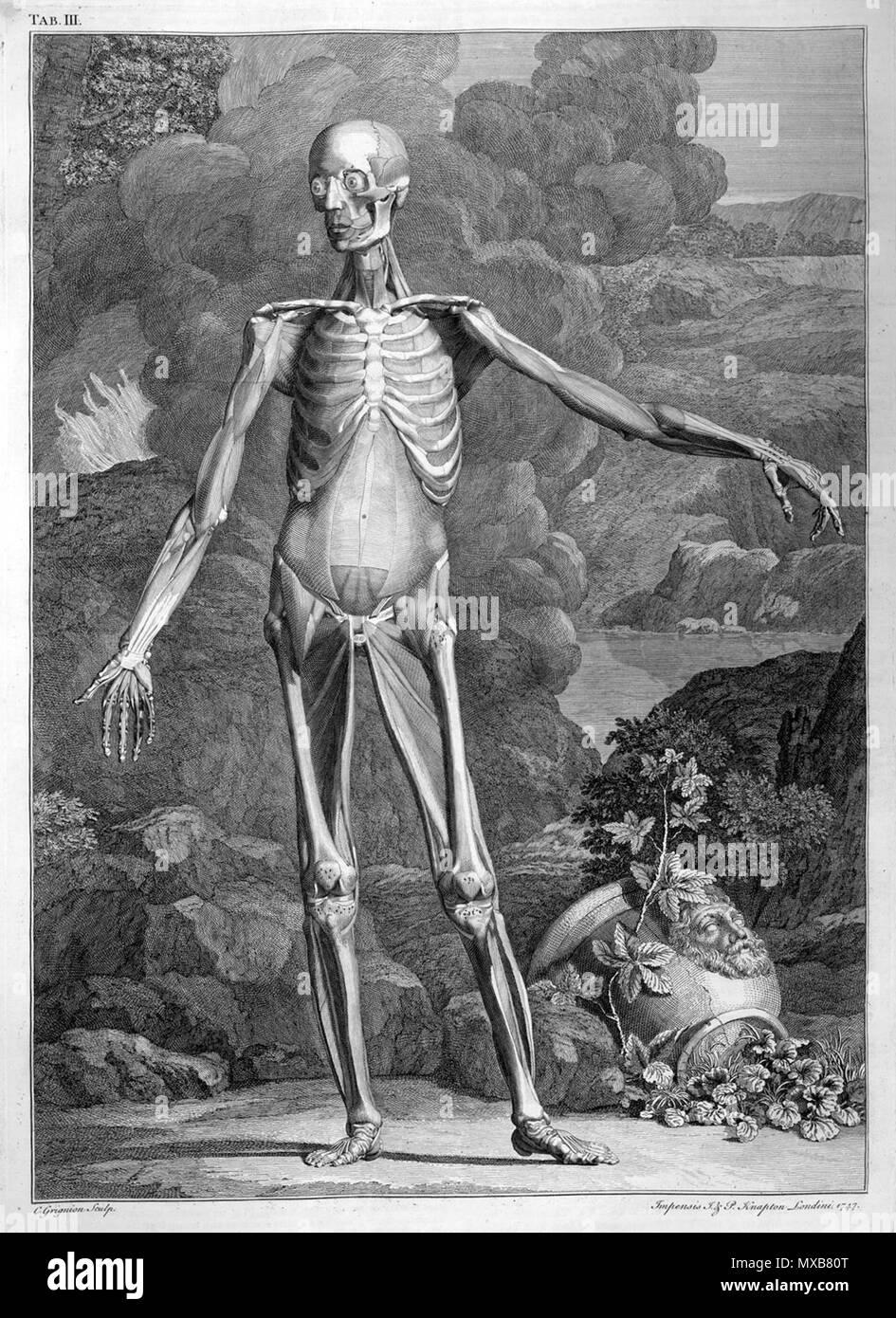 Nett Der Menschliche Körper Tabelle Fotos - Anatomie Von ...