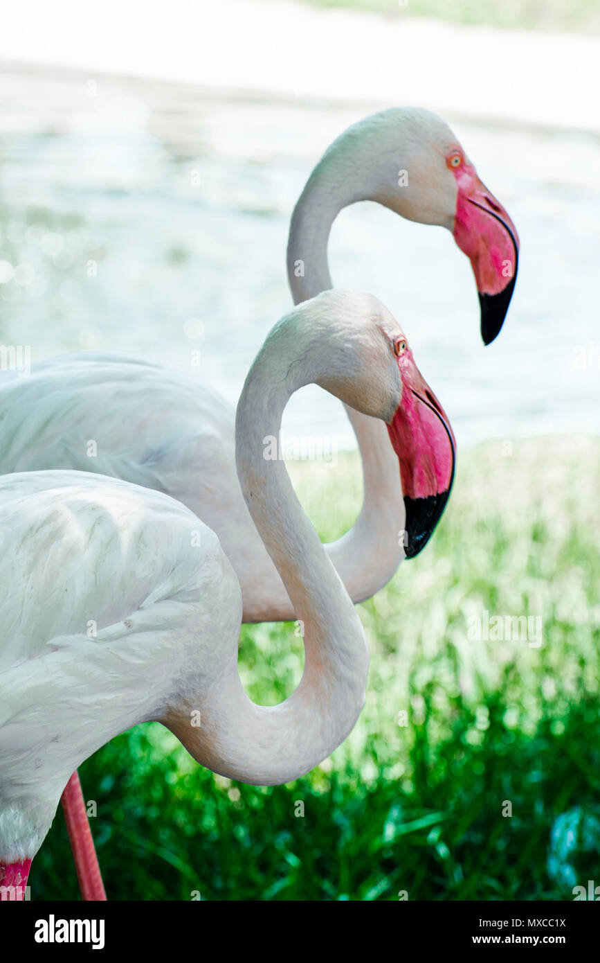 Gruppe von flamingos Stockbild