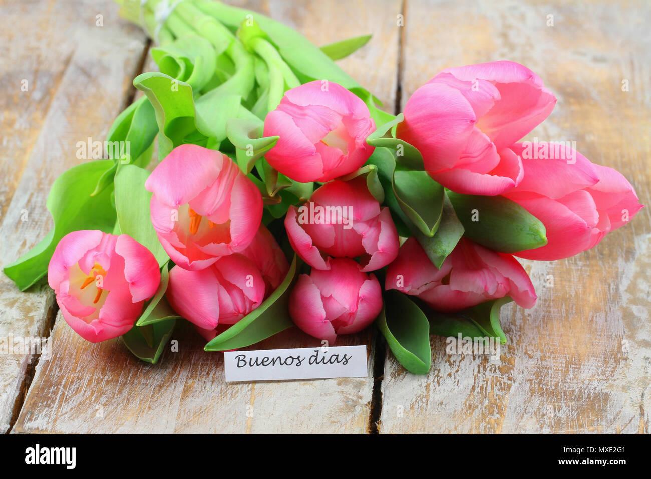 Buenos Dias Guten Morgen In Spanisch Mit Rosa Tulpen Auf