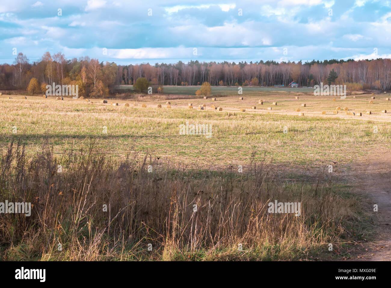 Herbst rustikale Landschaft, abfallende Wiese, Feld mit Strohballen nach der Ernte auf dem Hintergrund von Wald. Sonnigen Tag auf dem Land Stockbild