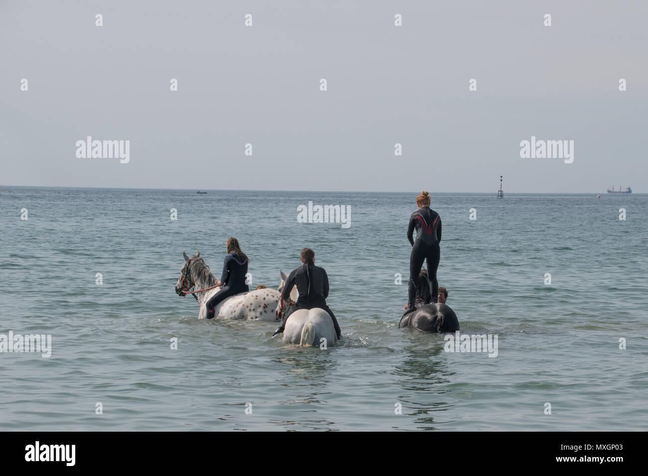 Langer Rock, Cornwall, UK. 4. Juni 2018. UK Wetter. Es war glühend heiß bei langen Felsformation heute, mit diesen Reiter nehmen ein Bad im Meer abkühlen lassen, mit Cornwall Schwimmen Pferde. Foto: Simon Maycock/Alamy leben Nachrichten Stockbild