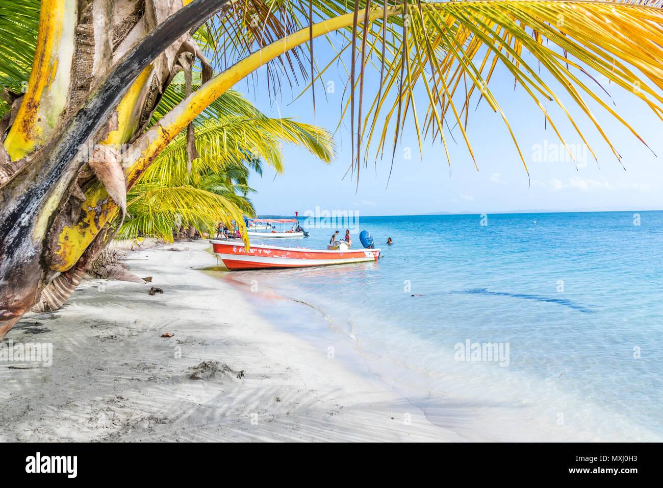 Starfish Beach Panama. Stockbild