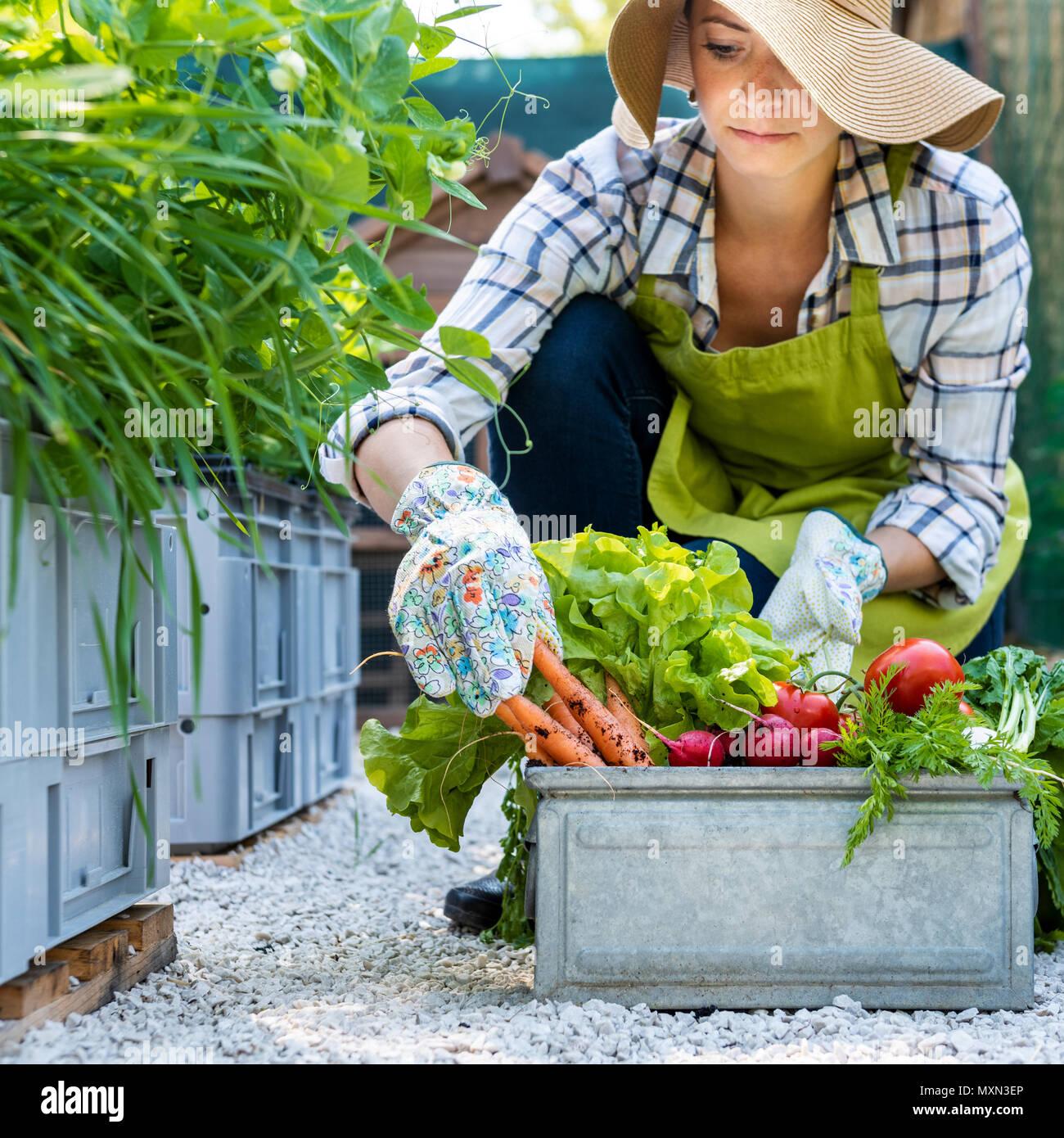 Schöne junge Frau Bauer mit frisch geernteten Gemüse in Ihrem Garten. Homegrown bio produzieren Konzept. Inhaber kleiner Unternehmen. Nachhaltige Landwirtschaft. Stockbild