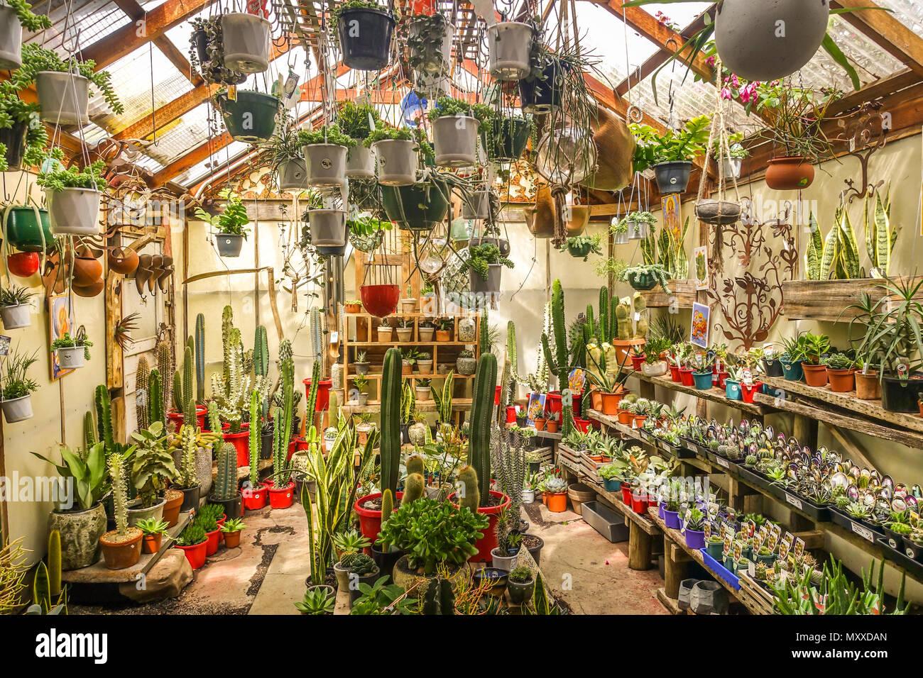 Eine Vielzahl Sammlung Von Kakteen Und Sukkulenten Pflanzen In