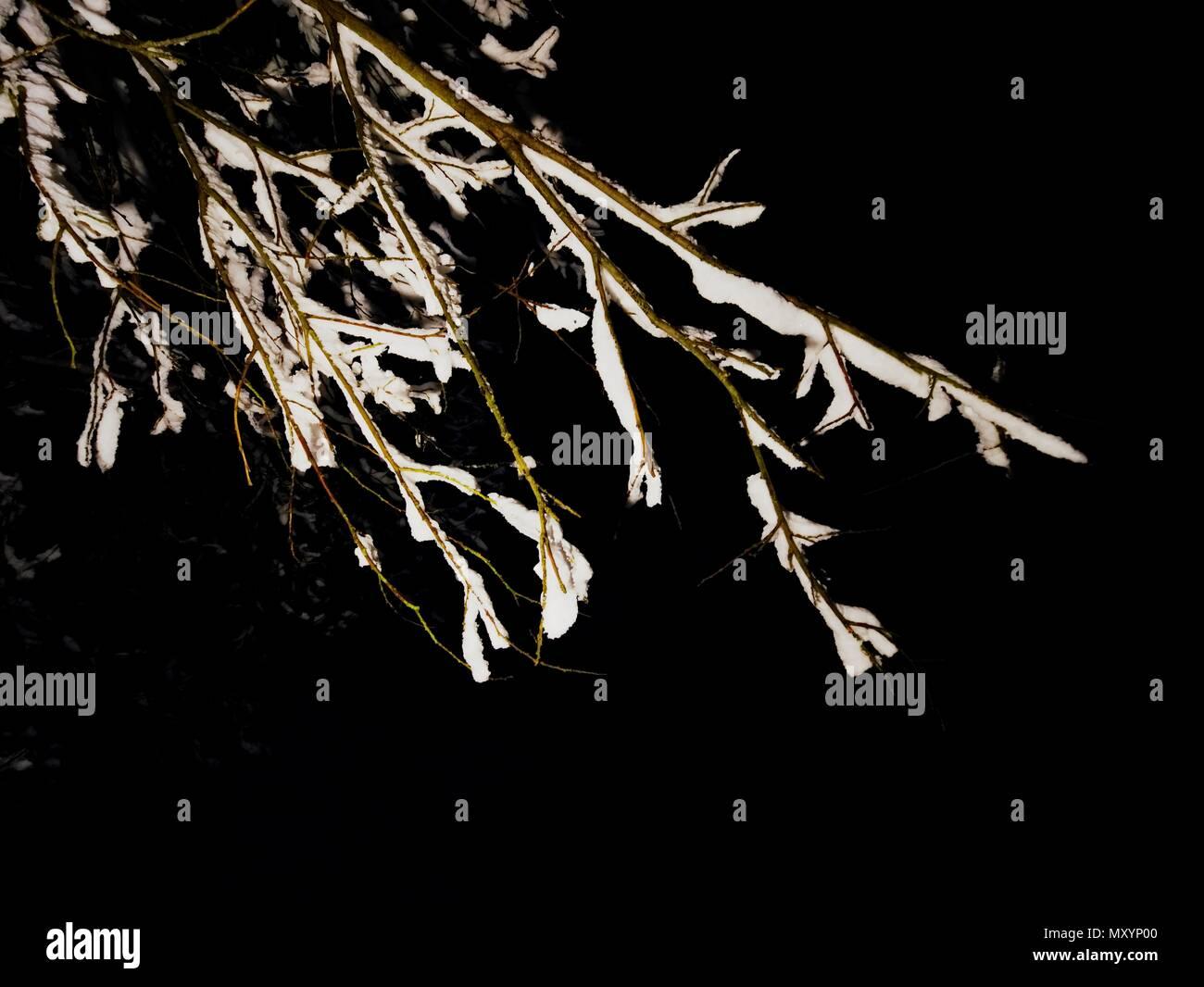 Zweige von Bäumen werden mit frischen Schnee in einen mysteriösen Wald bedeckt. Am Abend eine spannende kalten Jahreszeit Stockbild
