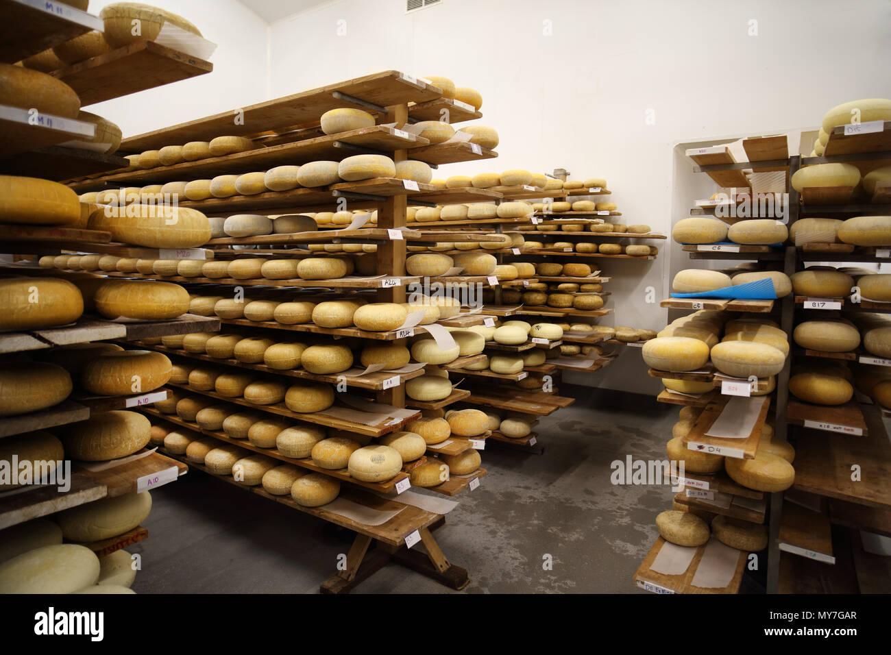 Alterung Zimmer wo Hartkäse gespeichert sind, um zu reifen Stockbild